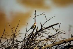 bird 12