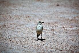 bird 8.1