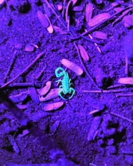 scorpion (2)