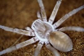 spider 2.1