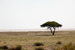 tree 2.1