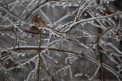 Kansas Ice Storm photo 6