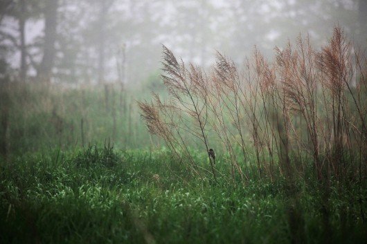 Bird in the mist